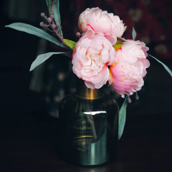 How Do You Get Rid of Bugs on Peonies?