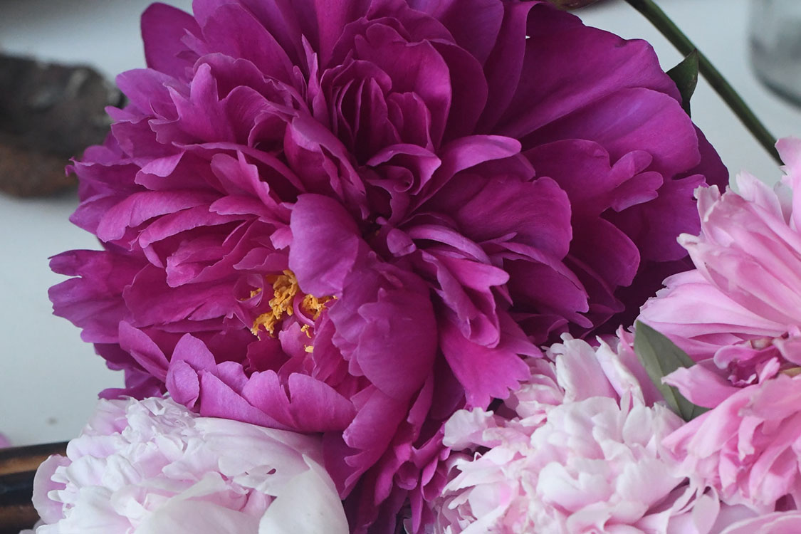 What is Qinglong Womochi Tree Peony?